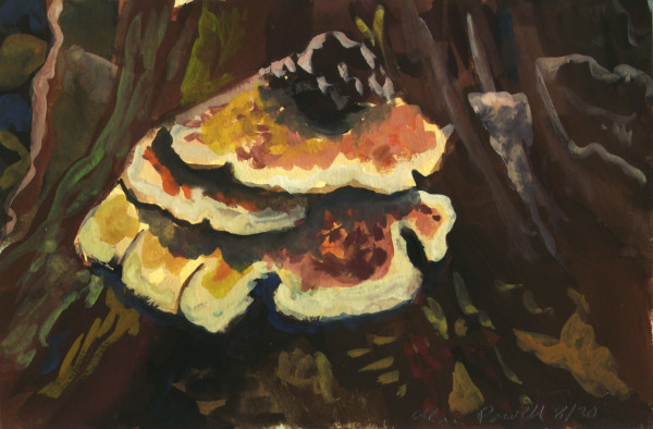 August 30, 2007; Chicken of the Woods Mushroom by Alan Powell
