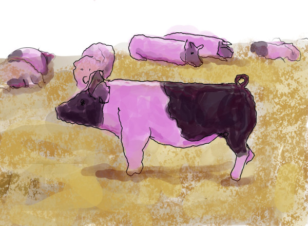 Pink Piggy by Alan Powell