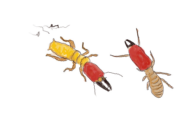 Yellow & Red Ants by Alan Powell