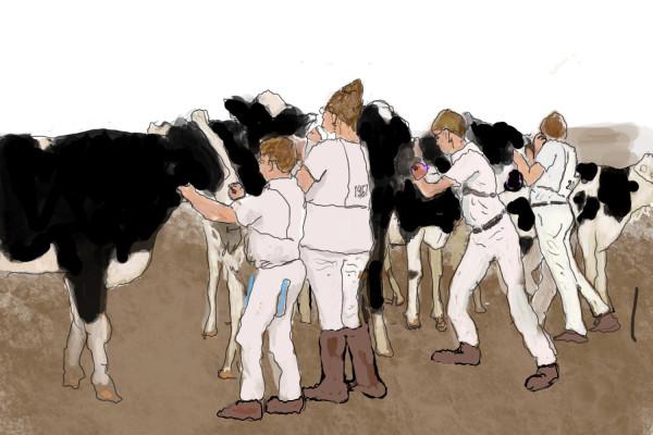 Herding Cattle by Alan Powell