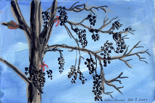 October 1, 2007; Wild Grape  by Alan Powell