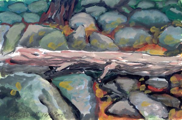 October 9, 2007; Tree Fallen on Rocks by Alan Powell