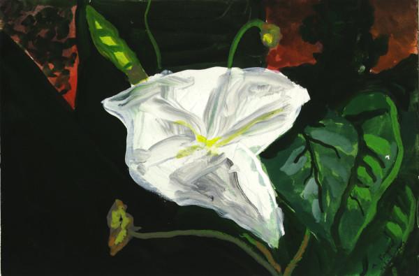 September 27, 2007; Moon Flower by Alan Powell