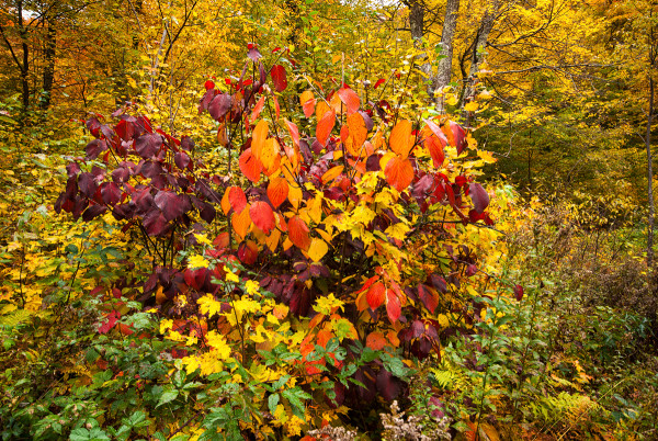 Fall Colors by Alan Powell