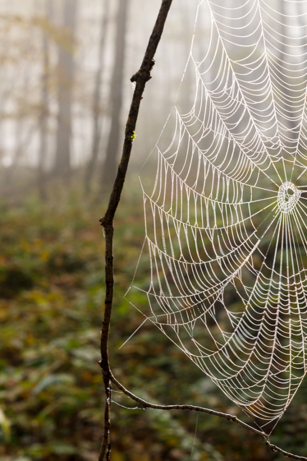 Spider web in morning Fog by Alan Powell