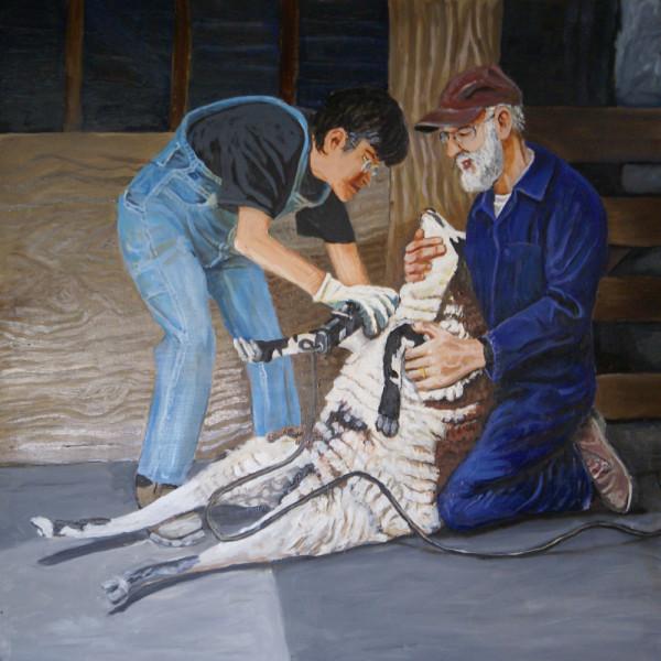 Jim & Meg shearing sheep by Alan Powell