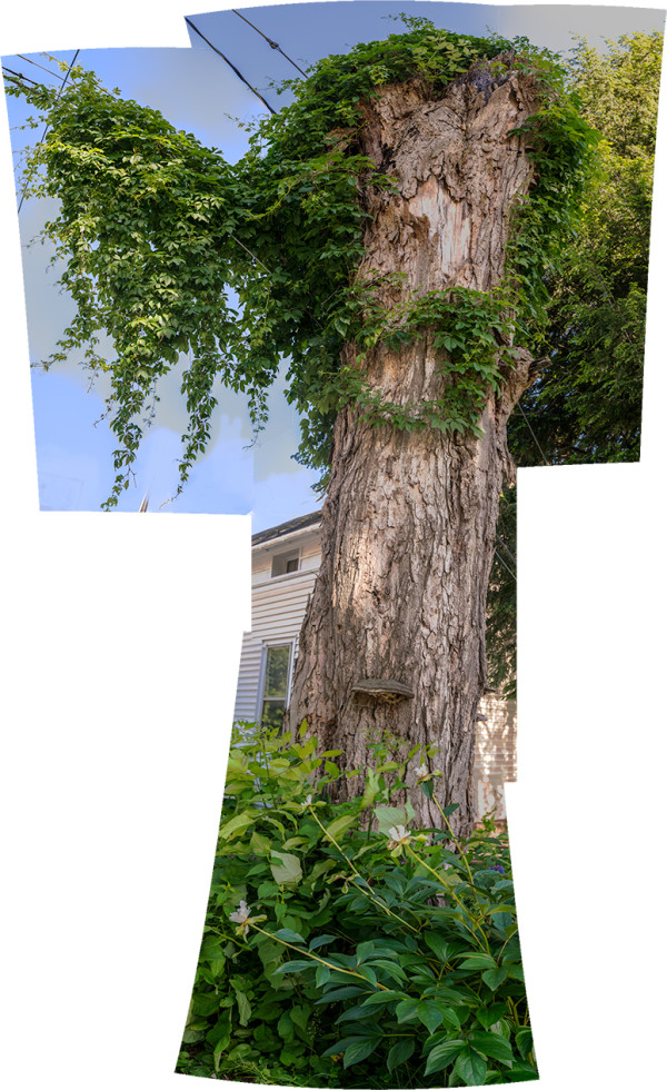 Tree by Alan Powell