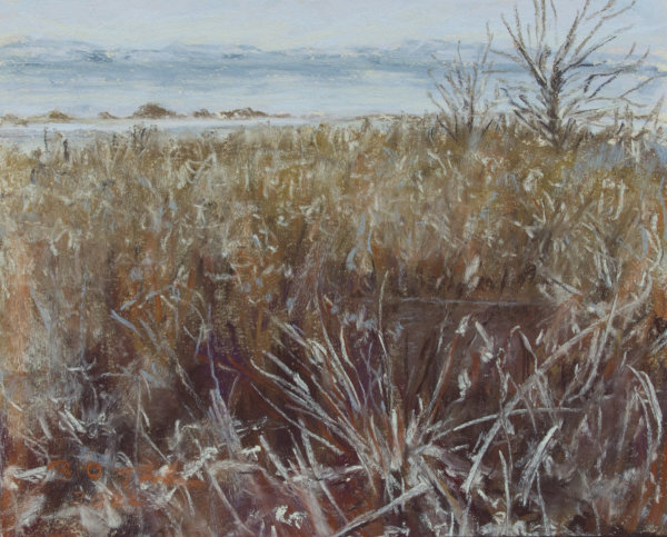 Frosted Marsh by Brenna O'Toole