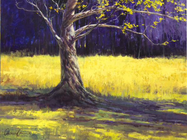 Summer Shade by Lawrence Lee