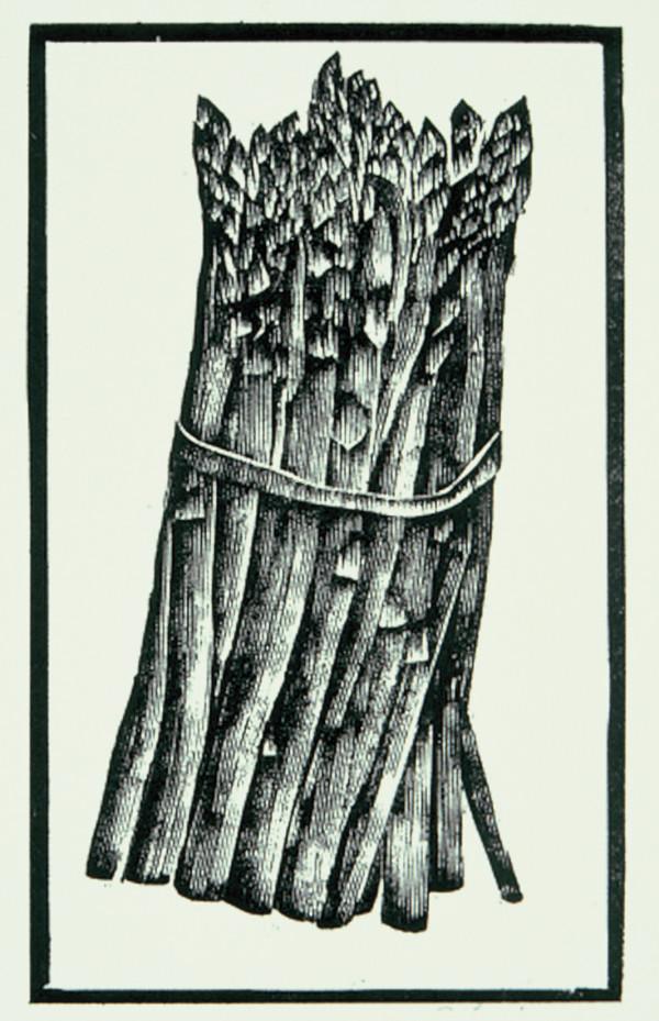 Asparagus by Tony Lazorko