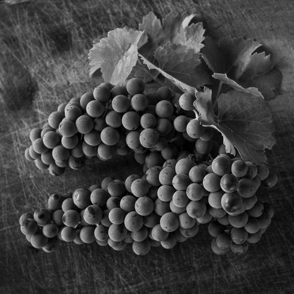 Sagrantino Grapes by From The Source