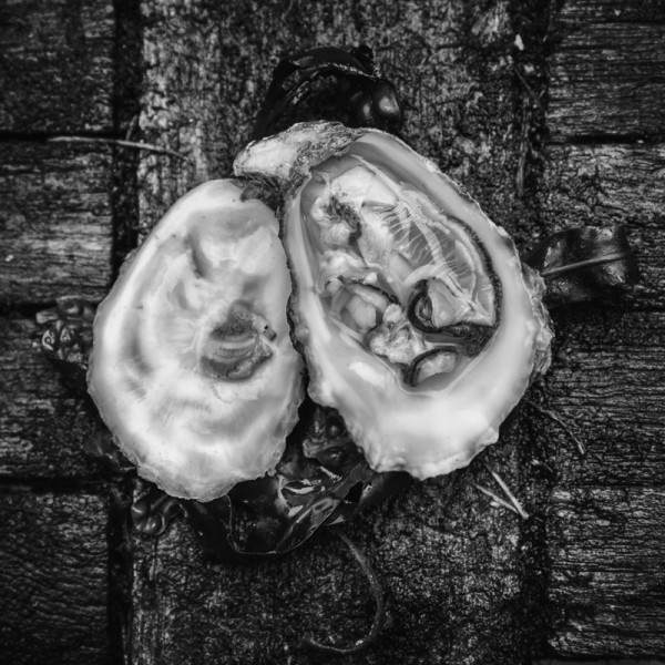 Gigas Oysters (Crassostrea Gigas) by From The Source