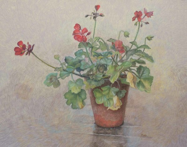 Pelargonium by Sophie Ploeg