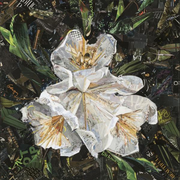 Canyon Snow Iris by Gina Torkos