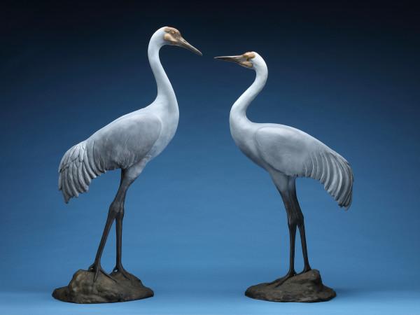 Sandhill Cranes by Cathy Ferrell