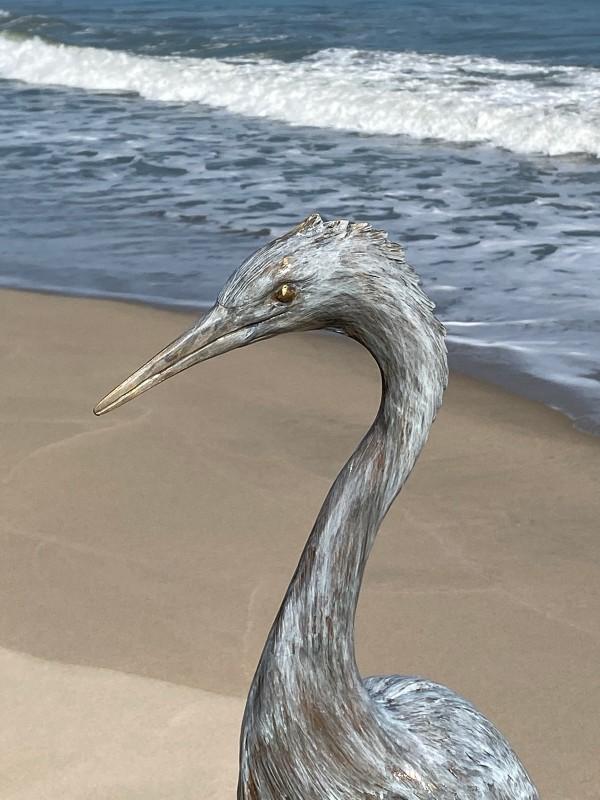 Snowy Egret by Cathy Ferrell