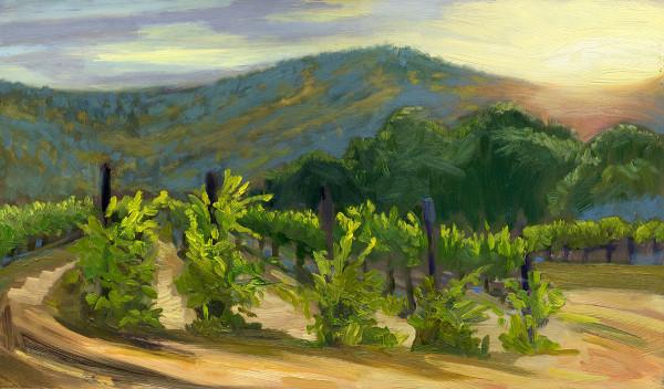 Vineyard #6