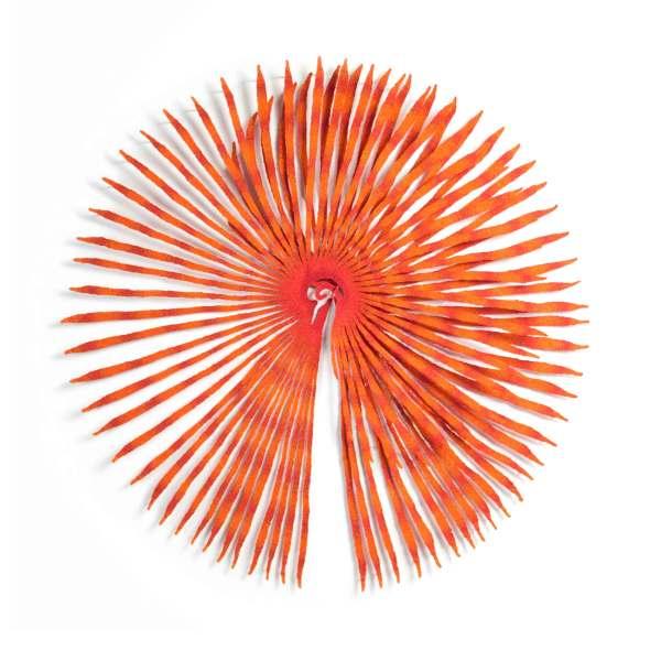 Fan Worm Crown (Sabella spallanzanii) by Meredith Woolnough