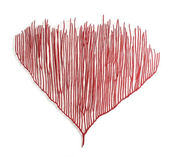 Harp Coral (Ctenocella pectinata) by Meredith Woolnough