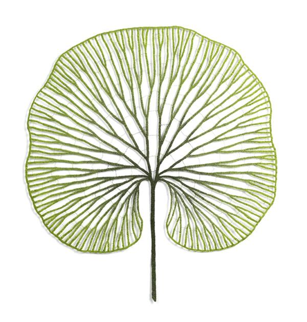 Kidney Fern (Hymenophyllum nephrophyllum) by Meredith Woolnough
