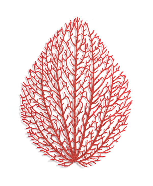 Peperomia (Peperomia sp.) by Meredith Woolnough