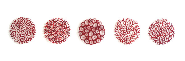 Specimen Collection 3 (coral) by Meredith Woolnough