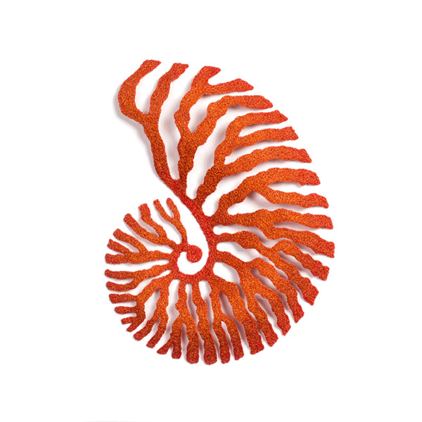 Nautilus by Meredith Woolnough