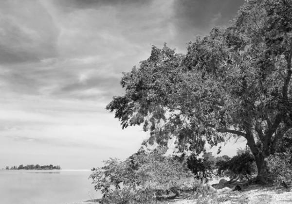 2912 - At the Shoreline by Linda Vermeulen