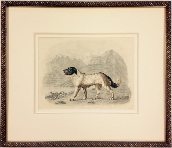2031 - Dog Portrait by William Gunton