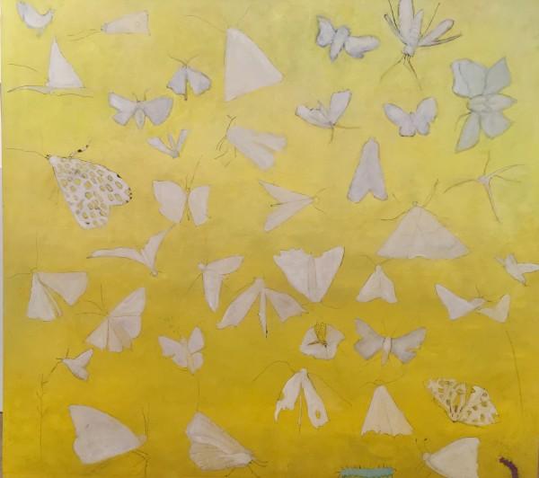 0588 - Carolina Moths by Marie H Becker