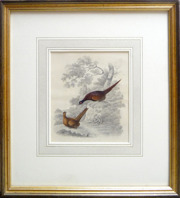 2033 - Two Pheasants by William Gunton