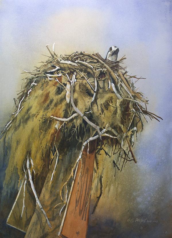 Nesting Osprey by Kris Parins