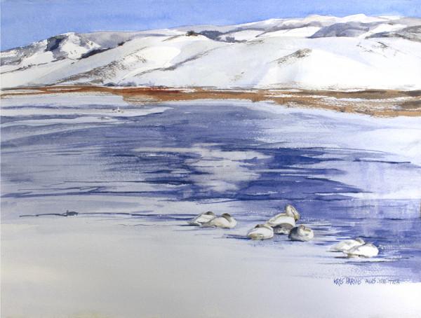 Swans on Ice by Kris Parins