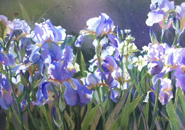 Sunstruck Iris by Kris Parins
