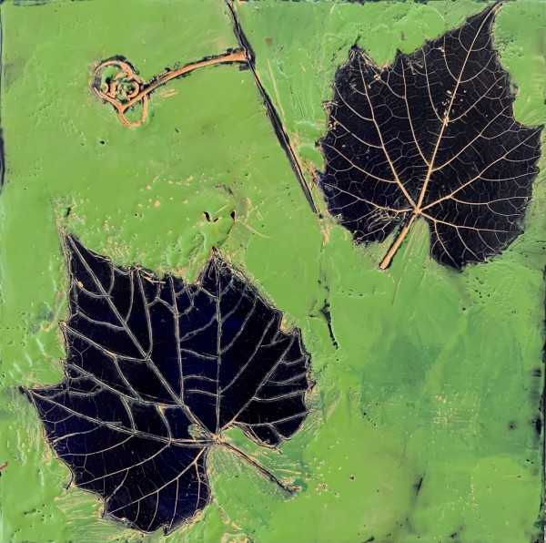 LeafSeries/Sycamore by Sally Hootnick