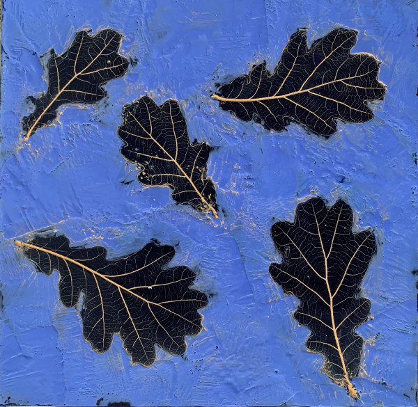 LeafSeries/Elm by Sally Hootnick