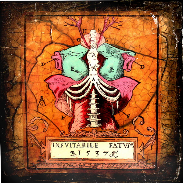 Inevitable Fate by Terri Maxfield Lipp