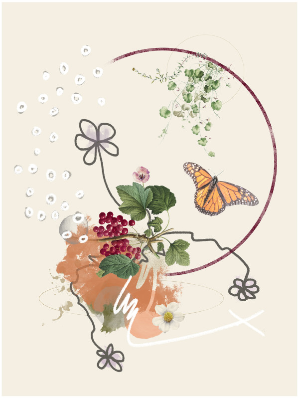 Food for the Monarchs by Liz Mares