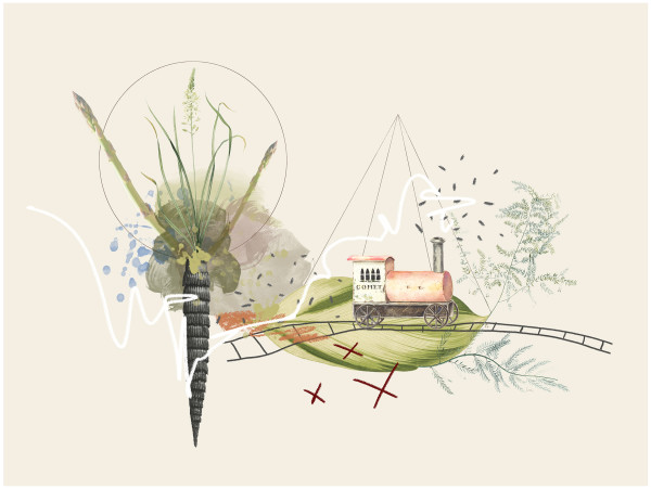 Guess Where Wild Asparagus Grows by Liz Mares