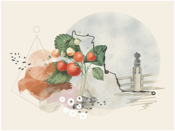 Plotting a Course to Mother's Strawberries by Liz Mares