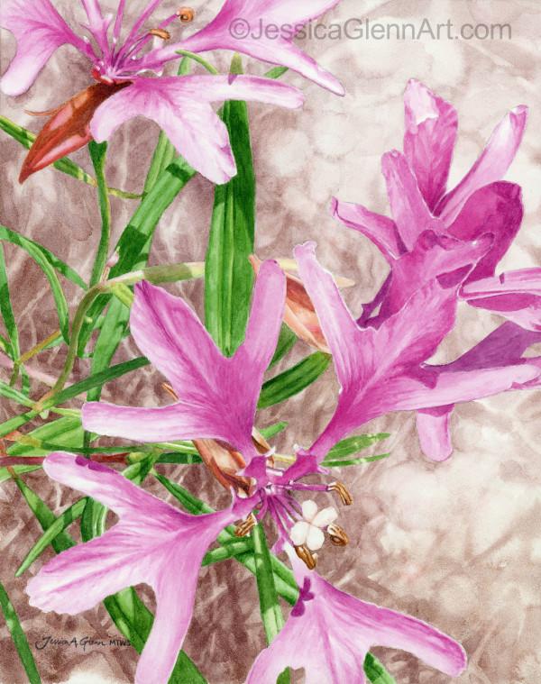 Deerhorn Clarkia by Jessica Glenn
