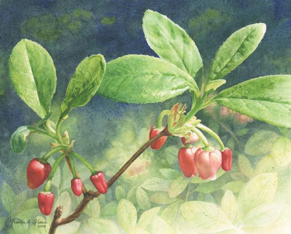 False Huckleberry by Jessica Glenn