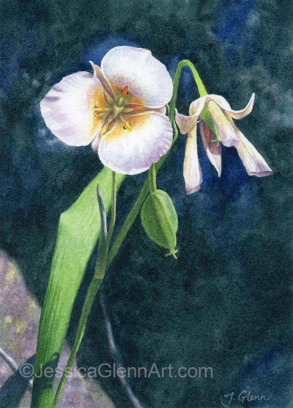 Mariposa Lily 2 by Jessica Glenn