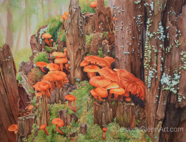 Mycoflora by Jessica Glenn