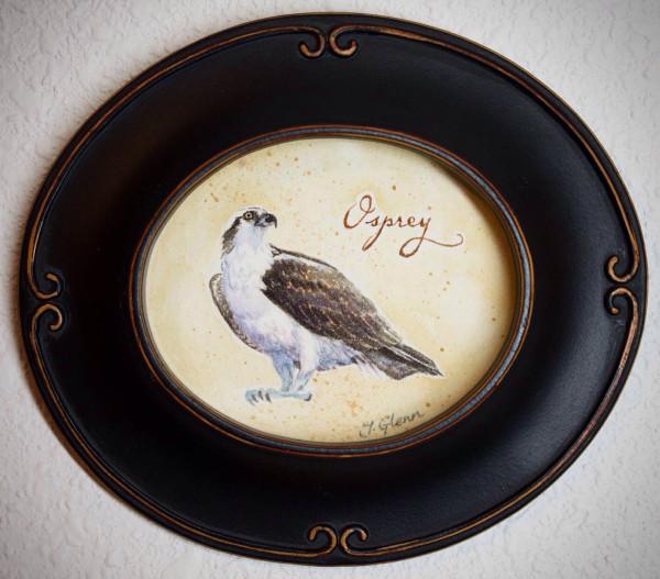 Osprey by Jessica Glenn