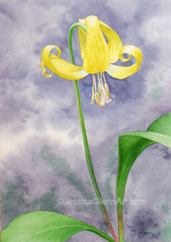 Glacier Lily by Jessica Glenn