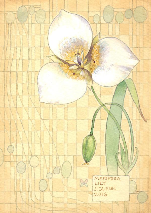 Mariposa Lily by Jessica Glenn