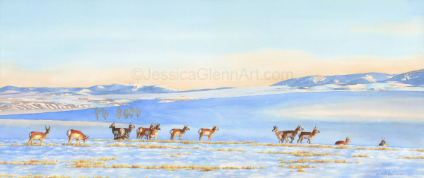 Winter Prairie Pronghorn by Jessica Glenn