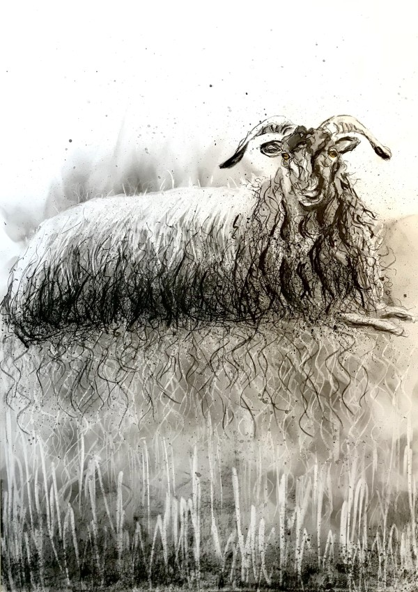 Reclining sheep by Audrey Reilly