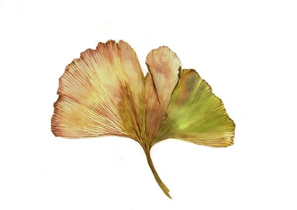 Fig leaf by Audrey Reilly
